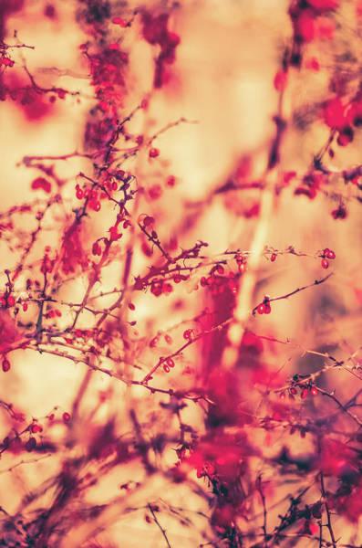 Photograph - Vintage Autumn I by Anne Leven