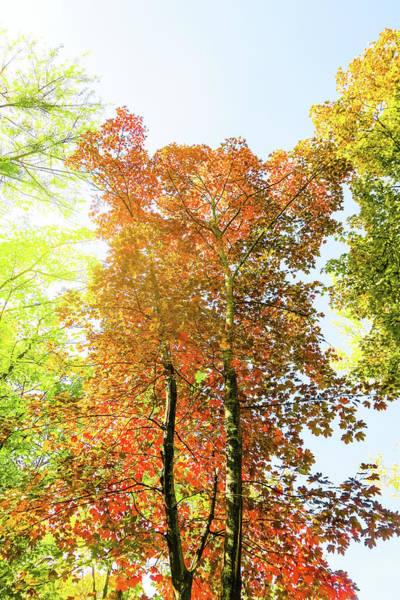 Photograph - Vintage Autumn II by Anne Leven