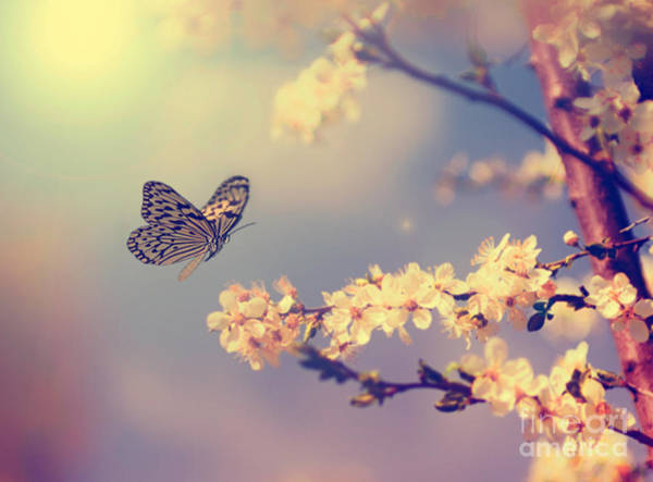 Organic Garden Wall Art - Photograph - Vintage Butterfly And Cherry Tree by Dark Moon Pictures