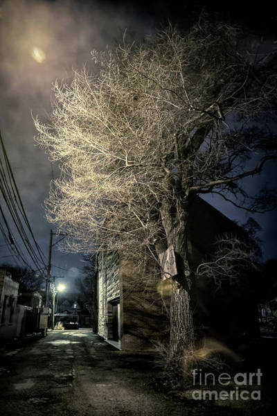 Haunted Wall Art - Photograph - If Trees Could Talk by Bruno Passigatti