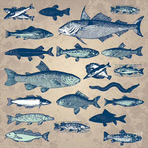Vintage Fish Drawings Set, Vector Art Print