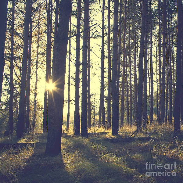 Wall Art - Photograph - Vintage Forest Background by Nature Photos