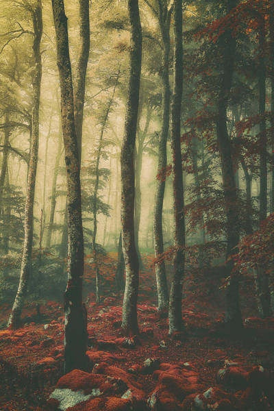 Photograph - Vintage Forest by Mikel Martinez de Osaba