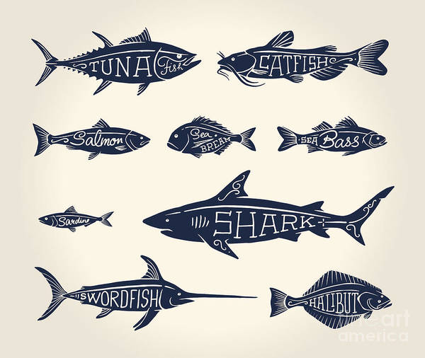 Engraved Digital Art - Vintage Illustration Of Fish With Names by Hauvi