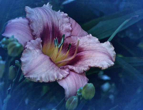 Wall Art - Photograph - Vintage Lily 2019 by Richard Cummings
