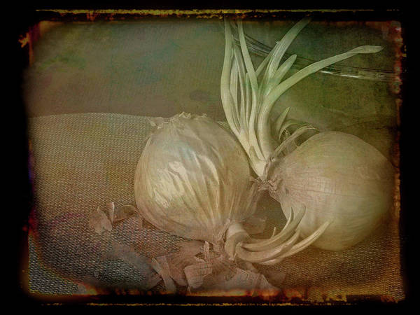 Mixed Media - Vintage Onions 3 by Lynda Lehmann
