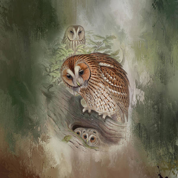 Wall Art - Mixed Media - Vintage Owls by Amanda Lakey