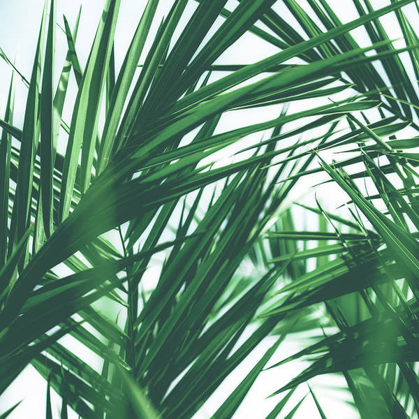 Photograph - Vintage Palms IIi by Anne Leven