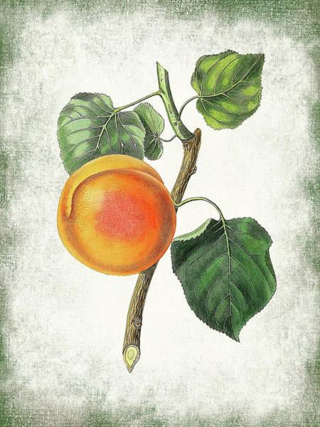 Wall Art - Digital Art - Vintage Peach Botanical by Flo Karp