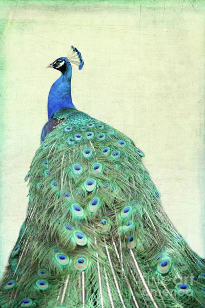 Photograph - Vintage Peacock by Sabrina L Ryan