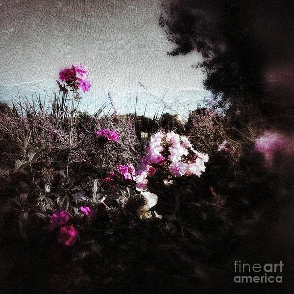 Photograph - Vintage Pink by Jacqueline McReynolds