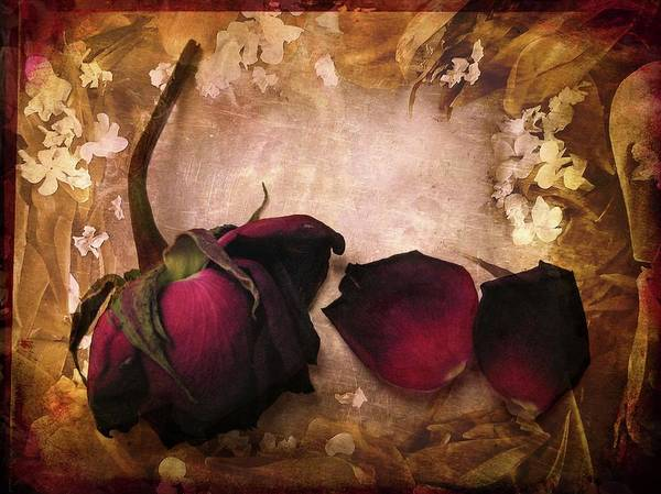 Red Roses Photograph - Vintage Rose Petals by Jessica Jenney