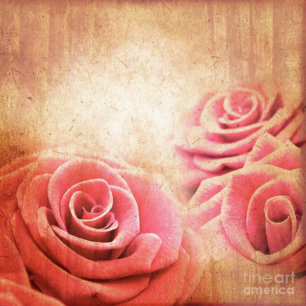 Wall Art - Photograph - Vintage Roses by Delphimages Photo Creations