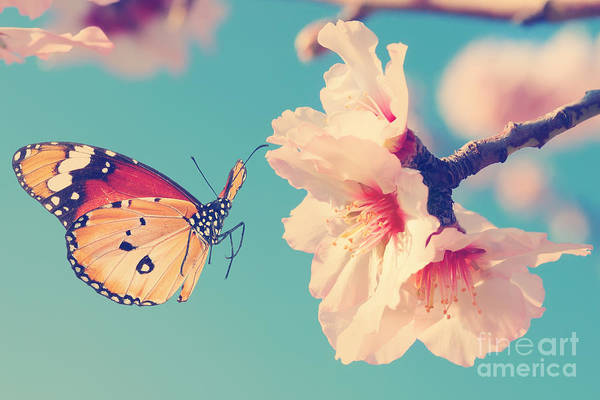 Wall Art - Photograph - Vintage Spring Image With Butterfly And by Protasov An