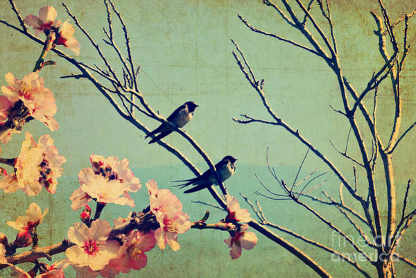 Wall Art - Photograph - Vintage Spring Image With Swallows And by Protasov An