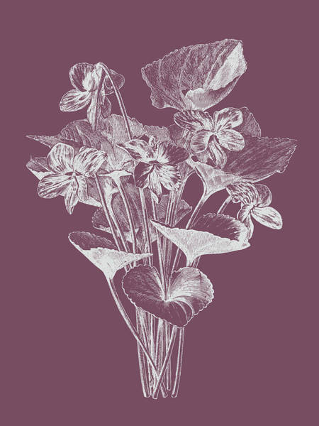 Love Mixed Media - Viola Cucullate Purple Flower by Naxart Studio