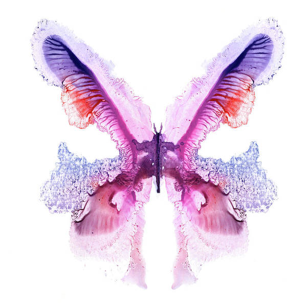 White Butterfly Digital Art - Violet Painted Butterfly by Pobytov