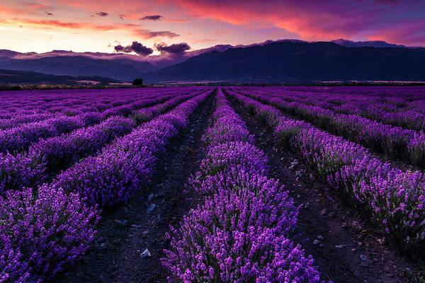 Photograph - Violet Sky by Evgeni Dinev