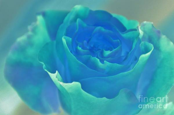 Wall Art - Photograph - Violets Are Red, Roses Are Blue by Terri LeSaint-Keller