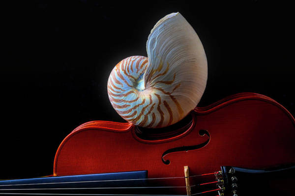 Wall Art - Photograph - Violin And Nautilus Shell by Garry Gay