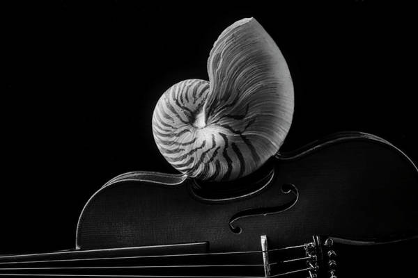 Wall Art - Photograph - Violin And Nautilus Shell In Black And White by Garry Gay