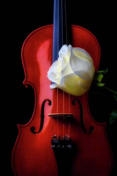 Wall Art - Photograph - Violin And White Rose by Garry Gay