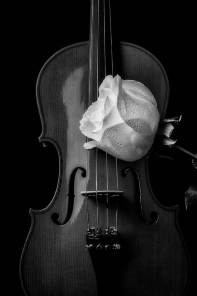 Wall Art - Photograph - Violin And White Rose In Black And White by Garry Gay