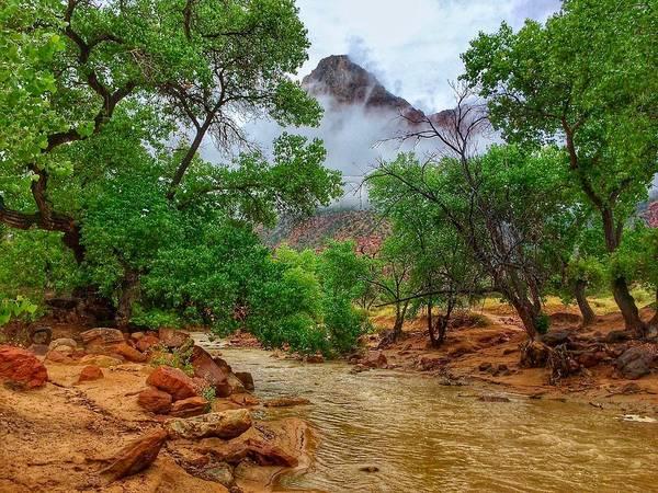 Photograph - Virgin River by Dan Miller