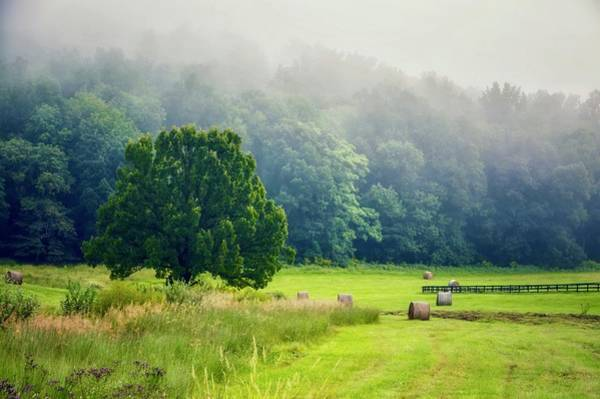 Photograph - Virginia by Shannon Kelly