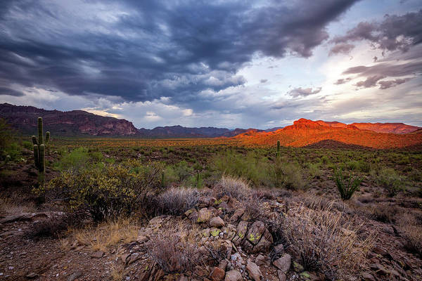 Photograph - Visions In The Desert by Rick Furmanek