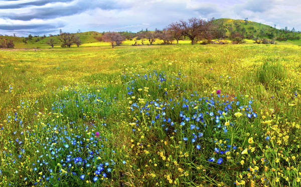 Photograph - Visions Of The Superbloom Along Shell Creek Road by Lynn Bauer