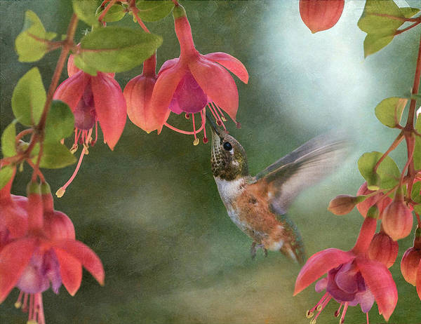 Wall Art - Photograph - Visitor In The Fuchsia by Angie Vogel
