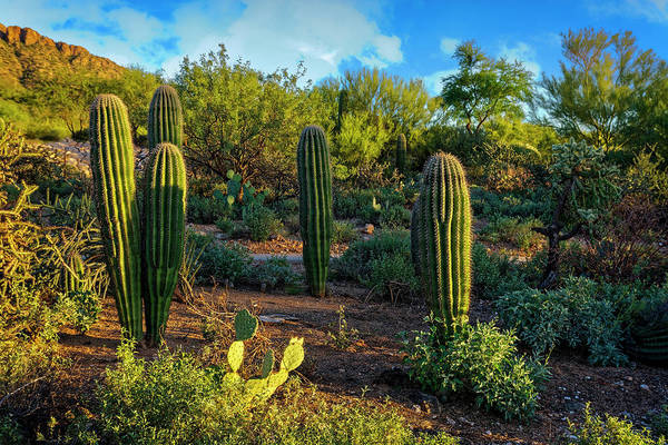 Photograph - Vislumbre De Sonoran H1833 by Mark Myhaver