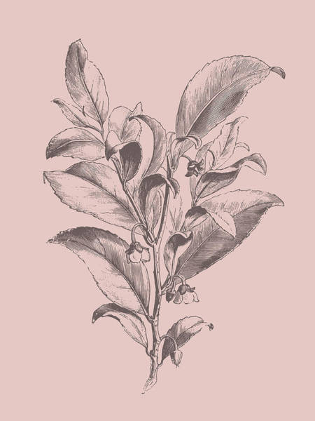 Bouquet Mixed Media - Visnea Mocanera Blush Pink Flower by Naxart Studio