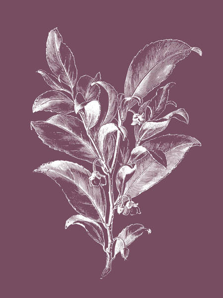 Bouquet Mixed Media - Visnea Mocanera Purple Flower by Naxart Studio