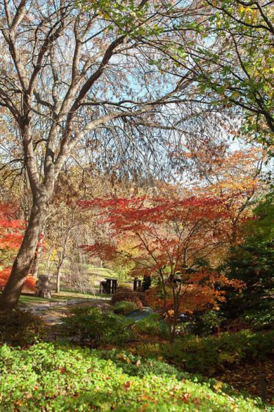 Photograph - Vivid Colors Of Japanese Garden 1 by Jenny Rainbow