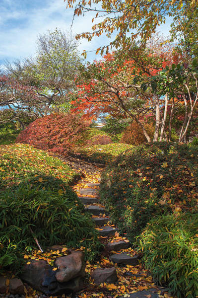 Photograph - Vivid Fall Colors Of Japanese Garden by Jenny Rainbow