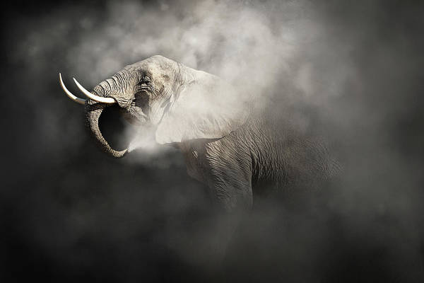 Wall Art - Photograph - Vulnerable African Elephant In The Dust by Susan Schmitz