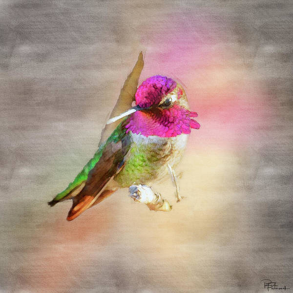 Photograph - Vying For Attention In Digital Watercolor by Rick Furmanek