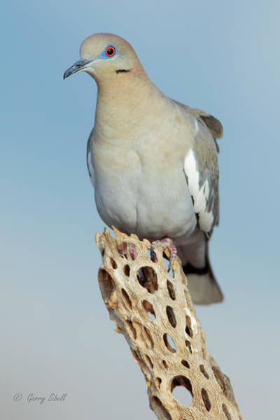 Photograph - W W Dove by Gerry Sibell