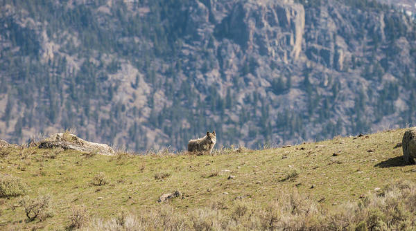 Photograph - W62 by Joshua Able's Wildlife