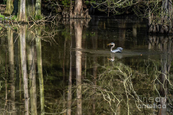 Photograph - Wacatee Swamp Lunch by David Smith