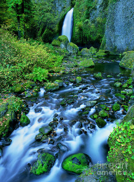 Photograph - Wachlella Falls Columbia River Gorge National Scenic Area Oregon by Dave Welling