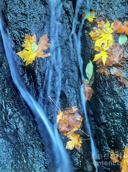 Photograph - Wachlella Falls Detail Columbia River Gorge by Dave Welling