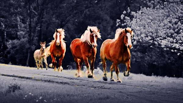 Wall Art - Photograph - Wait For Me Fellas 10 by Gary F Richards