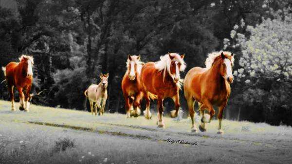 Wall Art - Photograph - Wait For Me Fellas 9 by Gary F Richards
