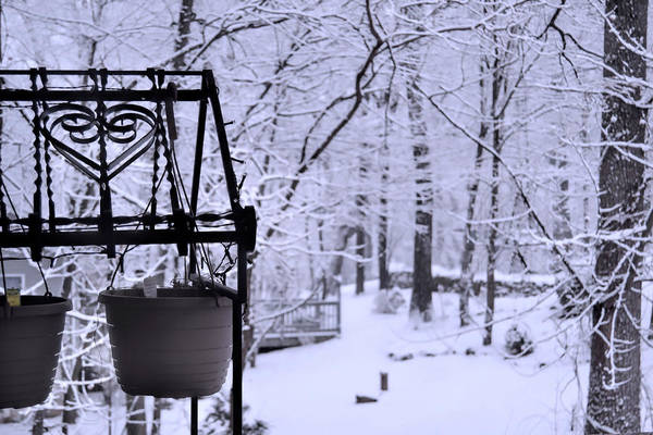 Photograph - Waiting For Spring by Kathy McCabe