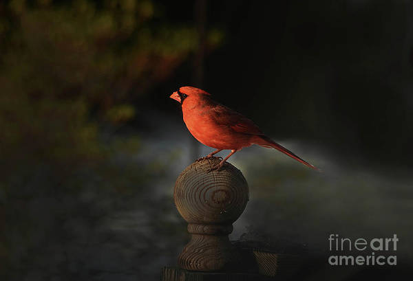Wall Art - Photograph - Waiting For Sunrise by Arnie Goldstein