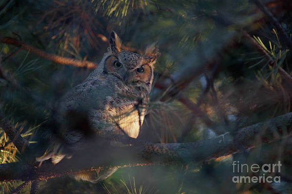 Photograph - Waiting For The Hunt by Barbara Schultheis