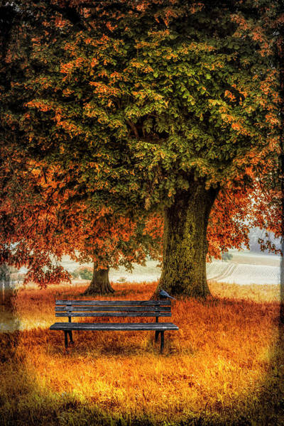 Photograph - Waiting For You In Autumn by Debra and Dave Vanderlaan